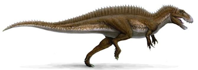 acrocanthosaurus-illustration