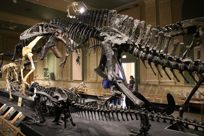 acrocanthosaurus1