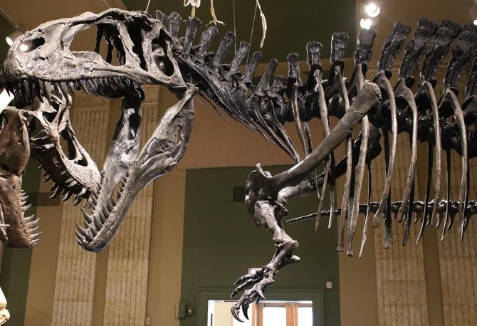acrocanthosaurus2