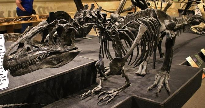 allosaurus-sitting1