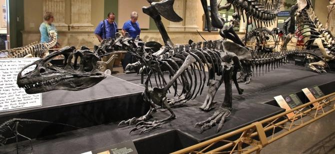 allosaurus-sitting3