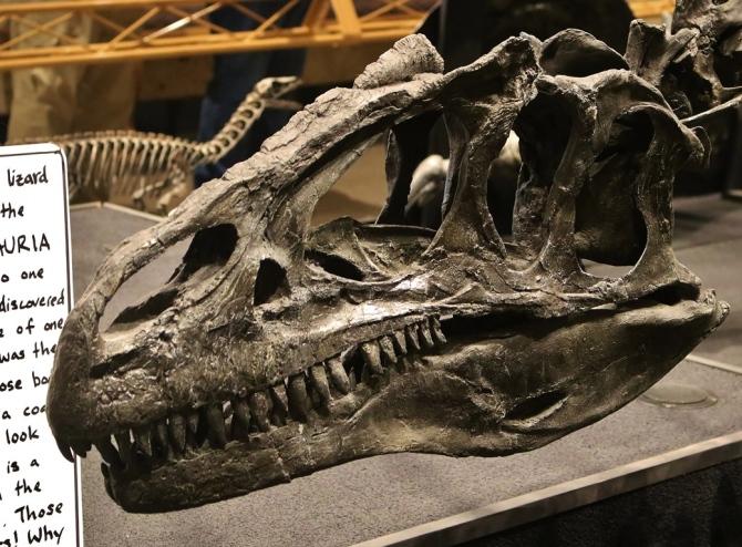 allosaurus-skull