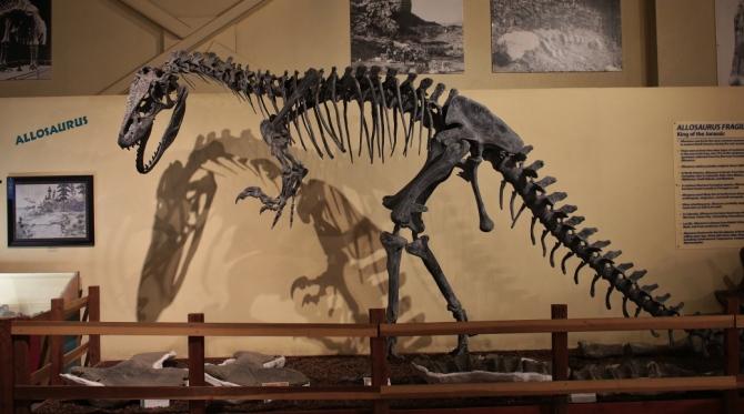 allosaurus2