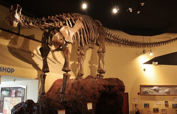 camarasaurus1