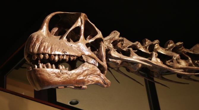 camarasaurus2