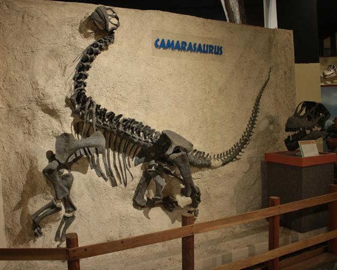 camarasaurus4