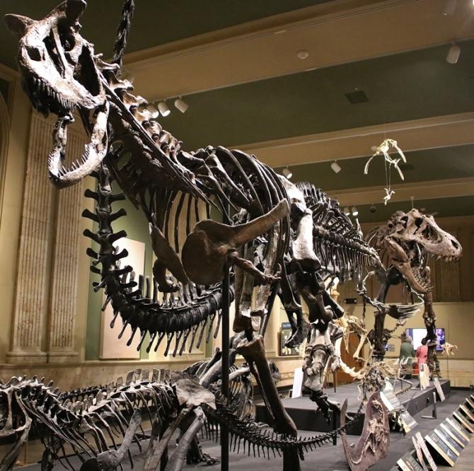carnotaurus-kenosha