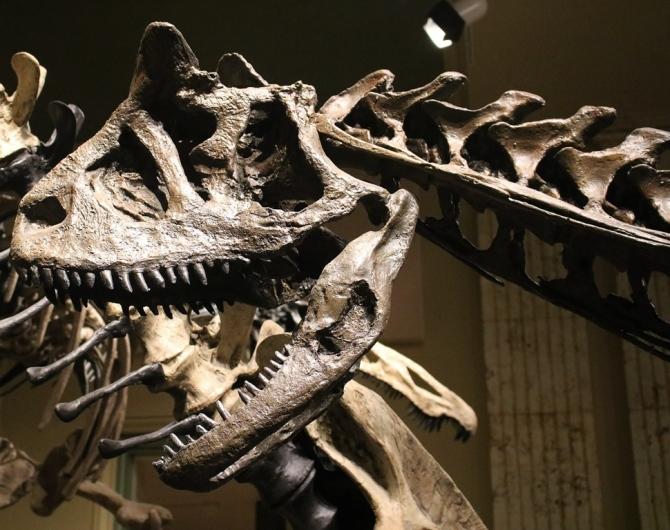 carnotaurus-skull
