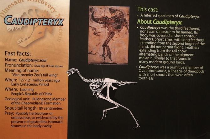caudopteryx1