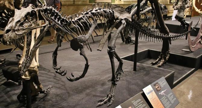 ceratosaurus3