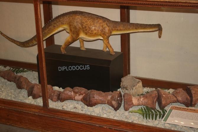 sauropods2