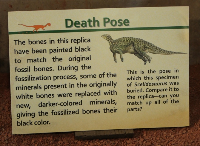 scelidosaurus-signage