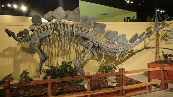 stegasaurus2
