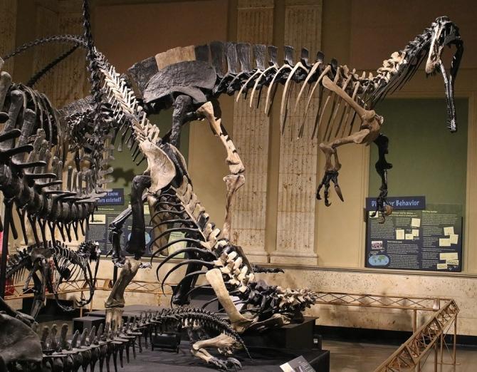 suchomimus-torvosaurus