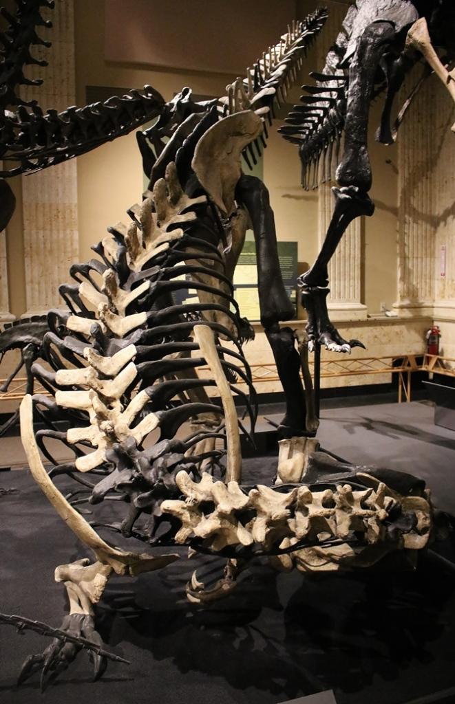 torvosaurus2
