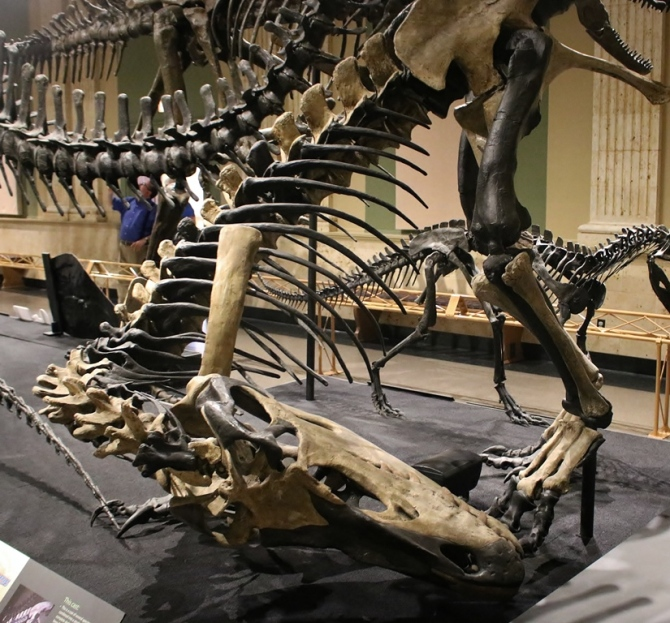 torvosaurus3