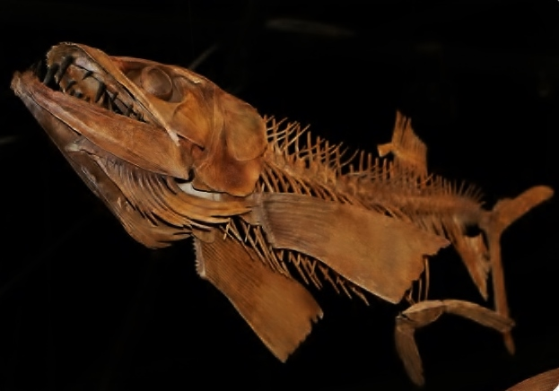 "alt=""Rocky Mountain Dinosaur Resource Center Fish"""