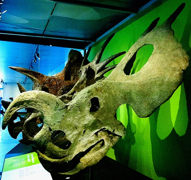 einiosaurus-skull