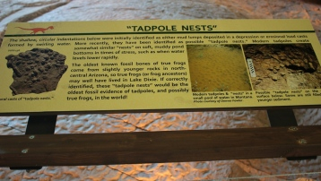 fossilized-tadpole-nests