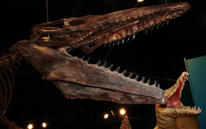 """alt=""""Tylosaurus"""""""