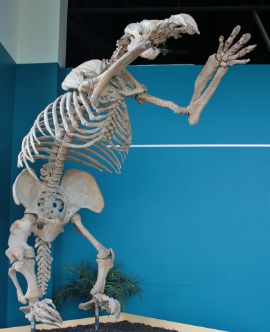 Jefferson Ground Sloth