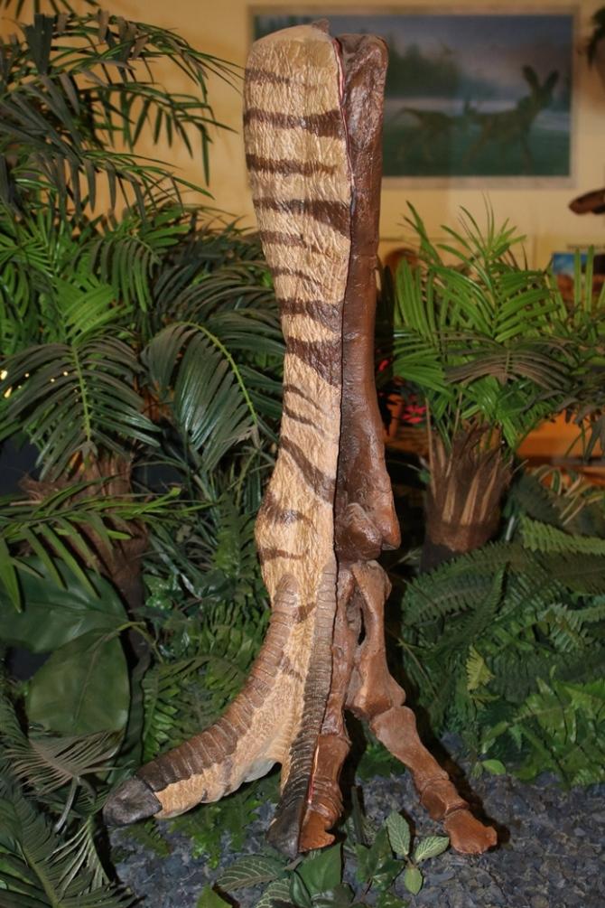 juvenile-endmontosaurus