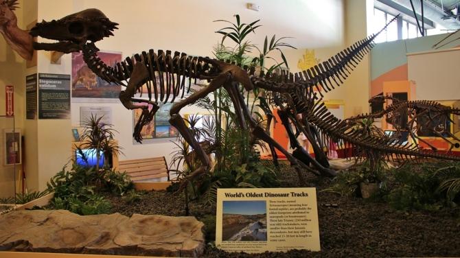 tetrasauropus