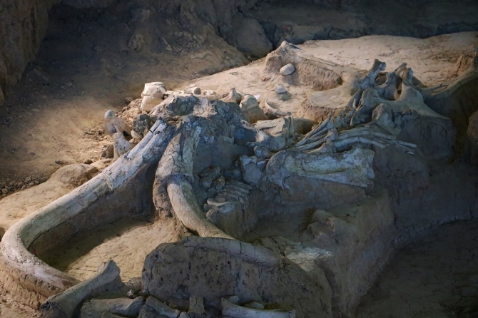 11-waco-fossils