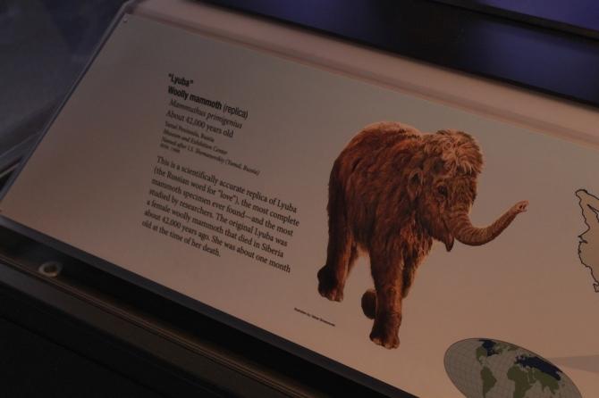 lubya-mammoth-signage
