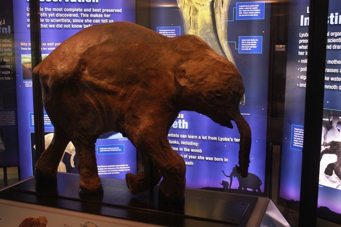 lyuba-mammoth