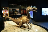 moab-dinosaur-museum-3
