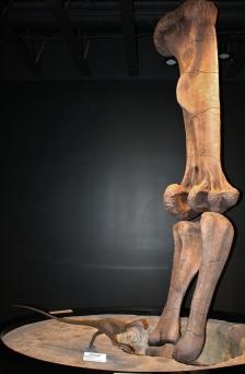 moab-dinosaur-museum-7