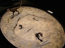 moab-dinosaur-museum-8
