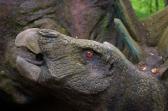 Stegosaurus eyes