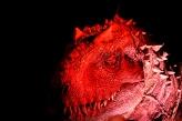 Indominus Rex 4
