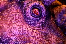 Pachyrhinosaurus Eye