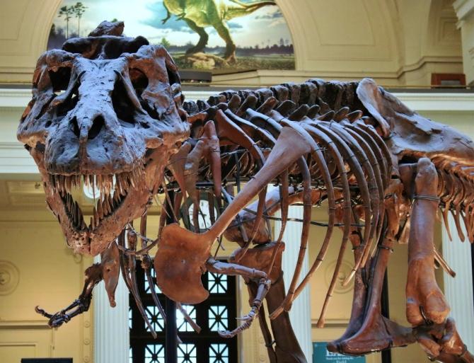 Sue Tyrannosaurus Rex 2