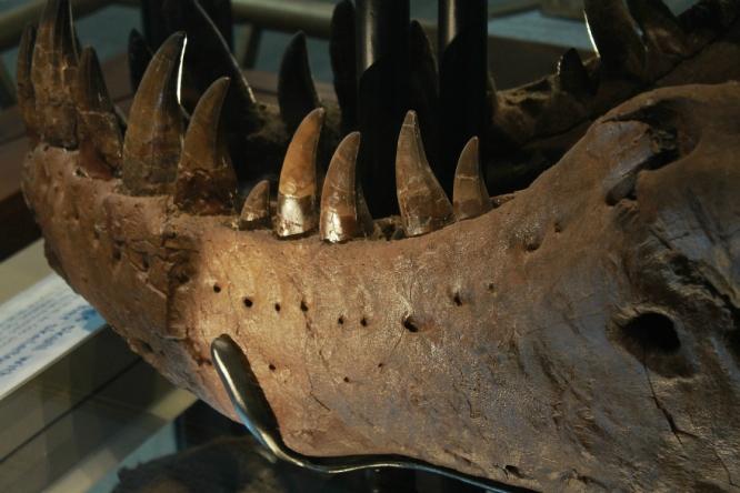 Sue T-Rex 25