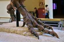 Sue T-Rex Foot 1
