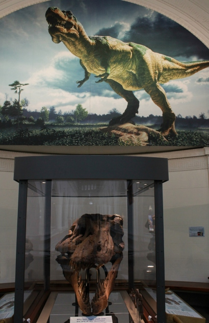 Sue T-Rex True Skull Display case