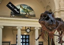 T-Rex Sue's Skull