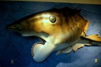 Buzzsaw Shark breakthrough