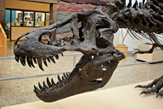Stan T-Rex New Mexico 2