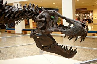 Stan T-Rex New Mexico 4