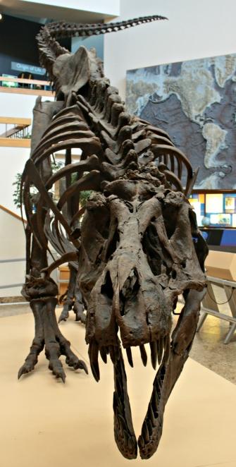 Stan T-Rex New Mexico 6