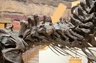 Stan T-Rex New Mexico 7