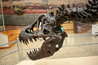 Stan T-Rex New Mexico 8