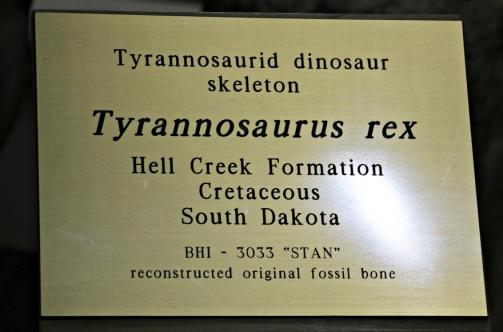 Stan T-Rex 1