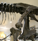 Stan T-Rex 2