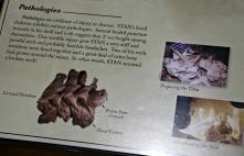 Stan T-Rex 5